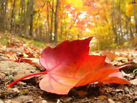 FALL CLEANUPS - COMPETITIVE PRICING