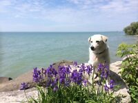 Pet Friendly on-the-Water Cottages for rent July week # 1