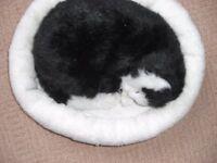 purring kitten in her fluffy bed