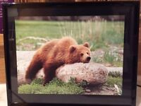 Framed photo of a bear, as new condition, ready to hang