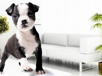 FREE Pet Stain Removal Product With Every Pet Odour Cleaning
