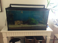 50 gallon Fish Tank with all accessories