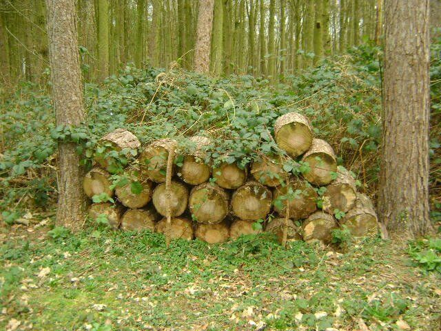 WOOD FOR SALE FOR LOG BURNERSOPEN FIRESin Coventry, West MidlandsGumtree - WOOD FOR SALE . FOR LOG BURNERS / OPEN FIRES .JUST NEEDS SPLITTING. COLLECTION ONLY THIS WOOD WAS FELLED LAST YEAR SO IS READY FOR BURNING. I HAVE OTHER AMOUNTS OF WOOD THAT IS FOR SALE AS WELL