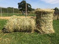 MINI ROUND HAY BALES FOR SALE