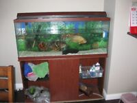 55 gl tank with all accessories and fish