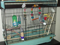 two  young Parakeets (Budgie) + Cage + a lot of accessories