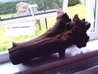 large piece of bog-wood perfect for fish tank center piece