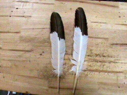 Native American Eagle Feathers Set Realistic Golden Powwow Regalia Authentic
