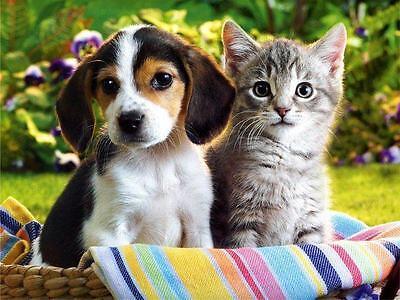 Amazon Pro Kräuter Wurmkur ***für Hunde oder Katzen*** Einmalgabe ohne Chemie!
