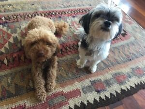 Free to a Good Home | Dogs & Puppies | Gumtree Australia