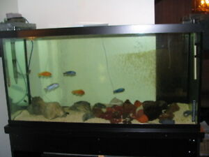 Aquariums 90 gallon w/Very Solid Stand, also 20gal West Island Greater Montréal image 2