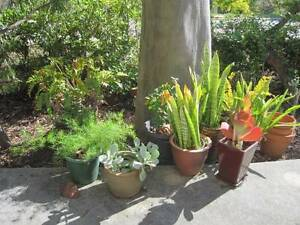 Plants, succulent and others fireresistant plant Greenmount Mundaring Area Preview