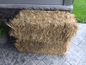 Straw Small Square Bales