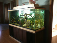 100 gal  custom built aquarium