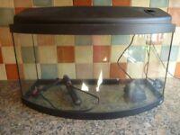 Bow Fronted Tropical Fish Aquarium