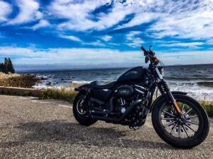 Excellent  Harley IRON 883