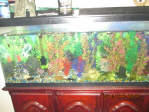 aquarium 55 gallon tout equiper