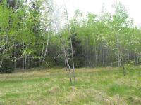 Beau terrain de 1 acre(+ou-) à Rivière-à-la-Truite
