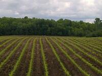 Wanted: Farm Acreage to Rent