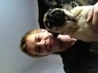 Mature male with small pug looking to rent a room or share