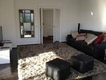 Extra large woolen rug Darling Point Eastern Suburbs Preview