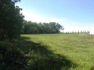 116 Acres Near Camrose Edmonton Edmonton Area image 8