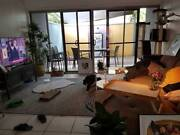 Room for rent $175 inclusive all bills near lutwyche bus stop Lutwyche Brisbane North East Preview
