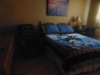 The Alternative - 260/week room rental