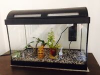 Fish Tank - with all the kit