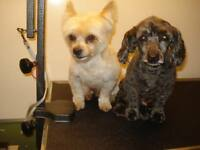 ~DOG DYNASTY~ GROOMING & BOARDING