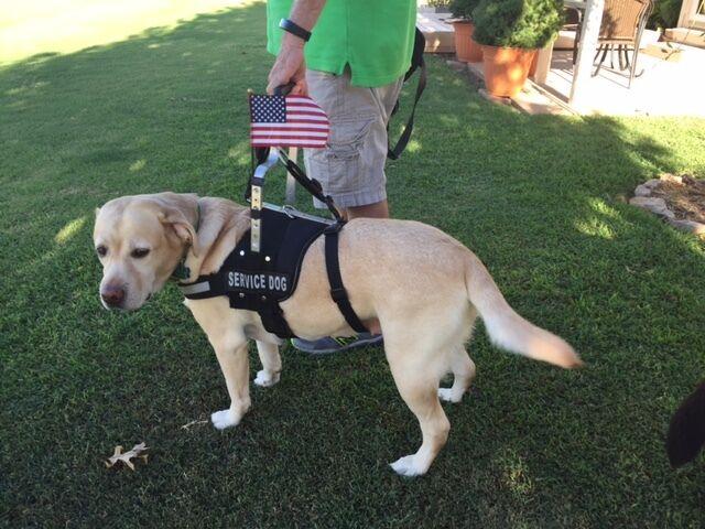 Service Dog Equipment, LLC