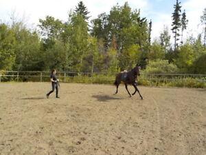 Colt Starting & Horse Training