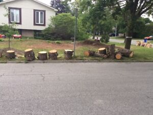 FREE WOOD LOGS - CURB PICK UP ANYTIME - SOUTH RICHMOND HILL