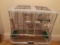 Baby budgie with cage & accessories