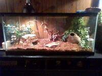 Female Spider Ball Python + Tank & Accessories For Sale!
