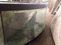 Curved fish tank for sale