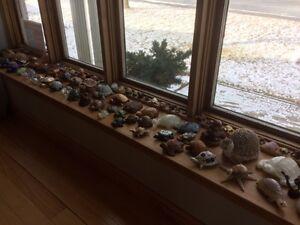 Collection de plus de 90 tortues de différents coins du monde