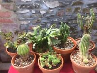 Calling All Cacti Lovers....Cacti/Succulents Collection For Sale