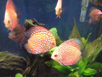 Tropical, Cichlid, Discus, Aquarium Plants and Saltwater