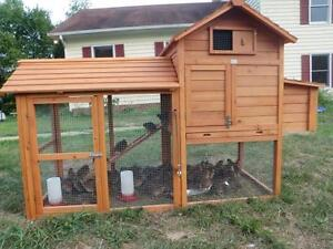 city chicken coop/poulailler de ville/lapin/rabbit