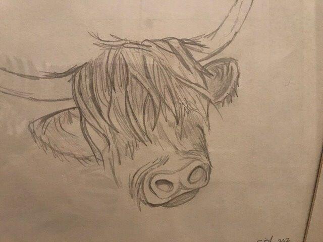 Cow Face Sketch