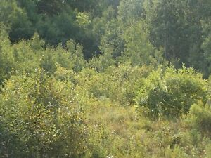 Wooded acreage - MLS #04777845 - HUNTING HUNTING!!!