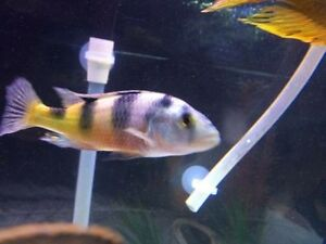 Are you looking to rehome your fish