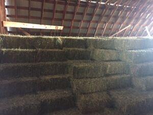 Alfalfa & Hay 4 Sale