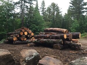 Large White Pine Logs for Sale