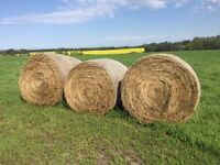 3 Round Hay Bales for sale ( very nice hay)