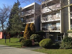 Bachelor available at 535 Niagara Street, Victoria