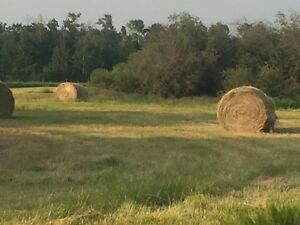 Excellent Horse Hay for sale by Wabamun