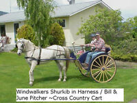 cross country horse cart & harness