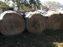 Large Round Hay Bales Haigslea Ipswich City Preview